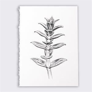 Sabline, dessin au graphite